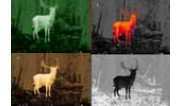 Night vision and thermal imaging
